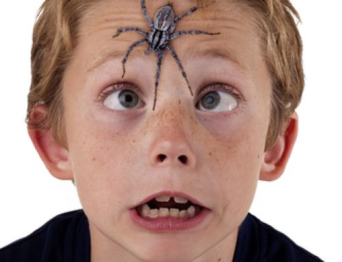 Splendiferous Spiders: Give This Activity a Spin!